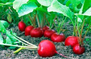 5 loại thực phẩm giúp thanh lọc và thải độc cơ thể