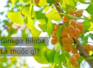 Ginkgo Biloba là thuốc gì?